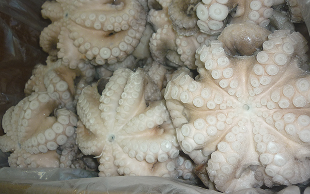 Pulpo Vulgaris